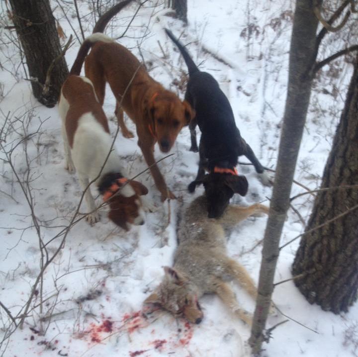 Wisconsin Insanity Wisconsin Wildlife Ethic Vote Our