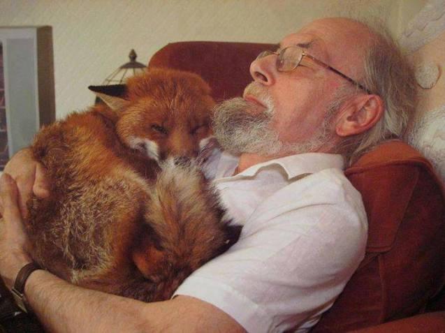 Madravenspeak Column # 84 Foxes