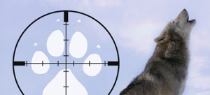 013470-wolf-target-081714